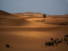 LIGHT IN MERZOUGA (photojordi) Tags: light paisajes luz sport canon de photography eos photo amazing sand foto y offroad 4x4 photos dunes quad lo best adventure arena ixus morocco fotos maroc yamaha atv suzuki atardeceres fotografia blanche buggy incredible marruecos plage ouarzazate trial zagora buggies marroc kawasaki dunas mejor aventura polaris mejores bombardier merzouga bests erfoud increible espectacular strem 980 rzr rzrs wwwphotojordicom photojordicom photojordi passiondclic