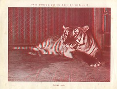 zoorelief p13
