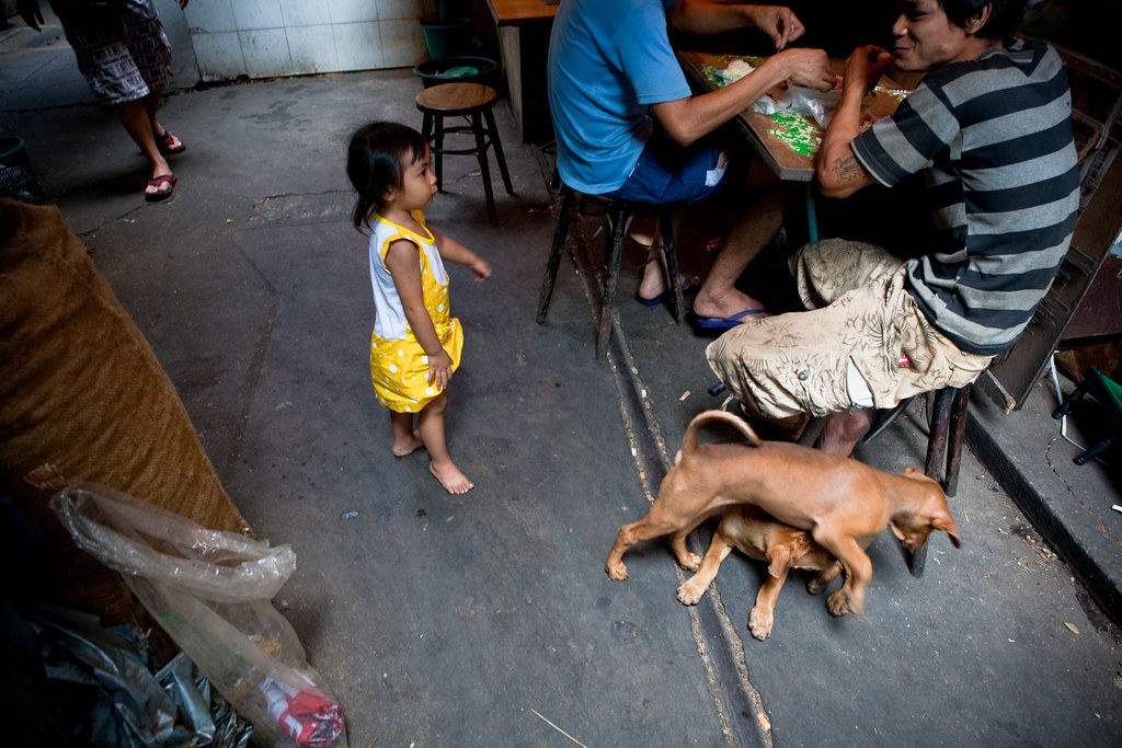 Kid, dogs, food, Chinatown, Bangkok, Thailand