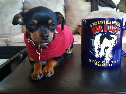 Small dog, massive cup
