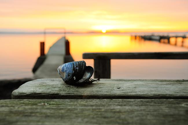 soluppgång vid bryggan