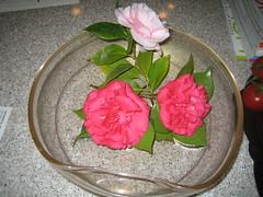 Camellias,Elsa Peretti. (clascaris) Tags: 1996 archimedesseguso goldcollection perettitiffany