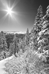 Larch Mountain - B&W (Jesse Estes) Tags: snow sunburst larchmountain jesseestes 5dii
