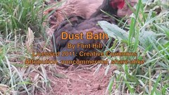 Dust Bath (Flint-Hill (away)) Tags: chicken australorp imovie dustbath digitalstabilization canong12 200110610dustbathm4v shot1280x720panddownsized