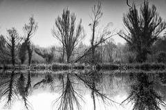 The dark side of the fairy tale (Vanvan_fr) Tags: monochrome noiretblanc bw nb blackandwhite trees arbres nature reflet reflection longexposure poselongue retourné renversé upsidedown darkside flou blurry foggy eau water lake lac brouillard touraine france photo gr