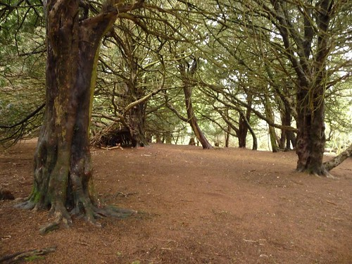 Yew-tree-woods-old-winchester-hill-2