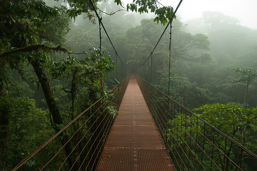 Hanging bridge in the canopy, Monteverde