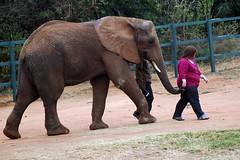 H Elephant walk