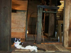 Industrial Fat Cat (davidnollie2) Tags: cats animals museum vintage kodak machinery missouri mills stateparks semo burfordville burfordvillecoveredbridge