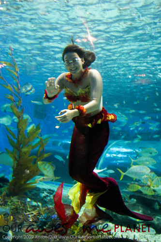 Little Mermaids at Manila Ocean Park-26