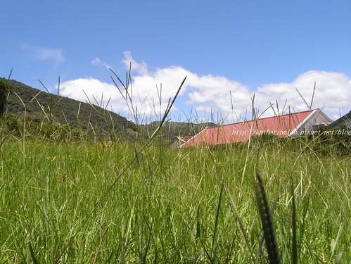 你拍攝的 5陽光草地。
