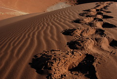Soussovlei (piccolo lord16) Tags: africa red landscape sand desert dunes dune reserve safari duna namibia rosso paesaggi dunas deserto orme sabbia impronte namib panorami scalata riserva