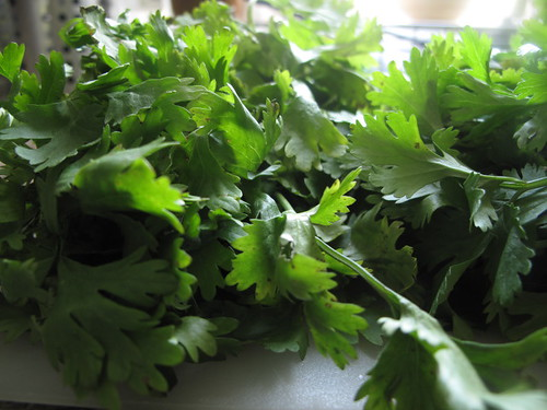 Coriander bunches