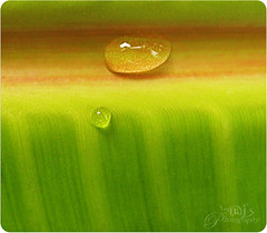 Love Story of 2 waterdrops (Naj ( Desired Hopes  )) Tags: world macro green love water canon point paul photography living waterfall drops interesting eyes waterdrop thought shoot place super explore story lives through wink h20 naj najy sx110