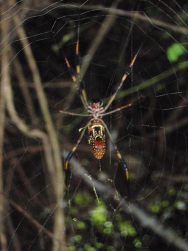 Closeup spider