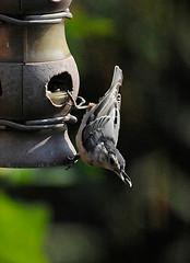 _DSC3043 (pnther60) Tags: backyard roanoke floraandfauna