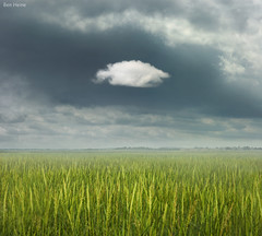 The Sky is Alive (Ben Heine) Tags: wallpaper sky plants cloud france green art net nature ecology grass smart rain composition print poster photography weird corn focus scenery soft natural cloudy pov horizon north pluie vivid peaceful peinture clean digitalpainting ciel rainy elements simplicity contraste environment elegant nuage copyrights simple normandy depth infinite forecast imagen wander badweather montsaintmichel meteo flore ecosystem sauvage pluvieux doux errer paisible softcolours manature benheine theskyisalive hubertlebizay hubzay flickrunitedaward poembybenheine rebelcloud infotheartisterycom
