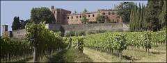 Castello di Brolio (brumó) Tags: italy italia tuscany chianti siena toscana 2009 vigne paglia cretesenesi luglio sangiovese agricoltura castellodibrolio vinotoscano tenutacastellodibrolio