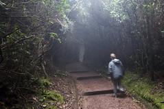 cacao_010 (Drumm Photography) Tags: travel cloud mist green forest volcano haze costarica foliage tico centralamerica alajuela cacao poas volcaniclake williambyrnedrumm