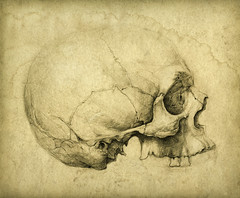 Skull study drawing (Yaroslav Gerzhedovich) Tags: art pencil vintage paper skull drawing picture retro study pencildrawing pencildrawings