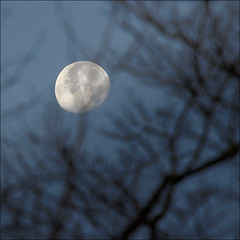 Daylight Moon view (NaPix -- (Time out)) Tags: blue trees sky moon canada nature night landscape daylight quebec bokeh montreal apocalypse telephoto tele moonscape manfrotto canonef70200mmf4lisusm canonef14xiiextender napix