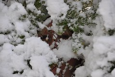 Peek a boo (the tЯefts) Tags: nikon baldeagle manitoba northdakota sawyer tamron lakewinnipeg d90 heclaisland d90club 18270mm
