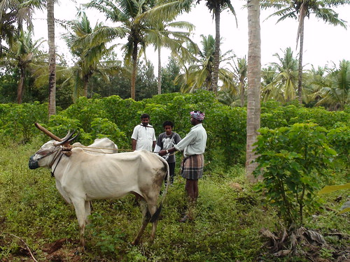 Farmers teaching Adarsha the art of manual plowing by Project Jatropha.