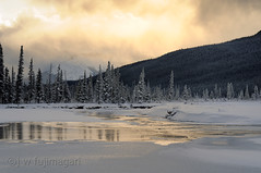 Gold on Rampart Flats (johnfuj) Tags: park canada water national alberta northamerica banff northsaskatchewanriver banffnationalpark westerncanada prairieprovinces canadianprairies rampartponds nikond300s rampartflats
