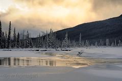 Gold on Rampart Flats (johnfuj) Tags: park canada water national alberta northamerica banff northsaskatchewanriver banffnationalpark westerncanada prairieprovinces canadianprairies rampartponds nikond300s rampartflats