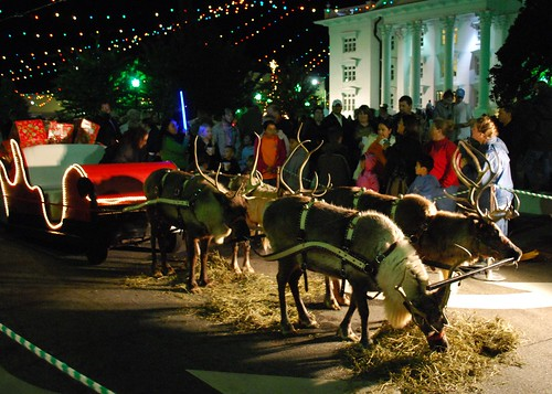 reindeer downtown Moultrie (5)