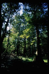 cypress preserve 2009 13b (tinkerbrad) Tags: tree film nature 35mm mississippi olympus scan swamp cypress om preserve greenville wetland om2s omsystem