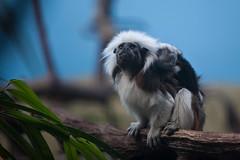 6388 (Arie van Tilborg) Tags: winter zoo blijdorp wintertuin dierentuin blijdorpzoo diergaarde rotterdamzoo arievantilborg