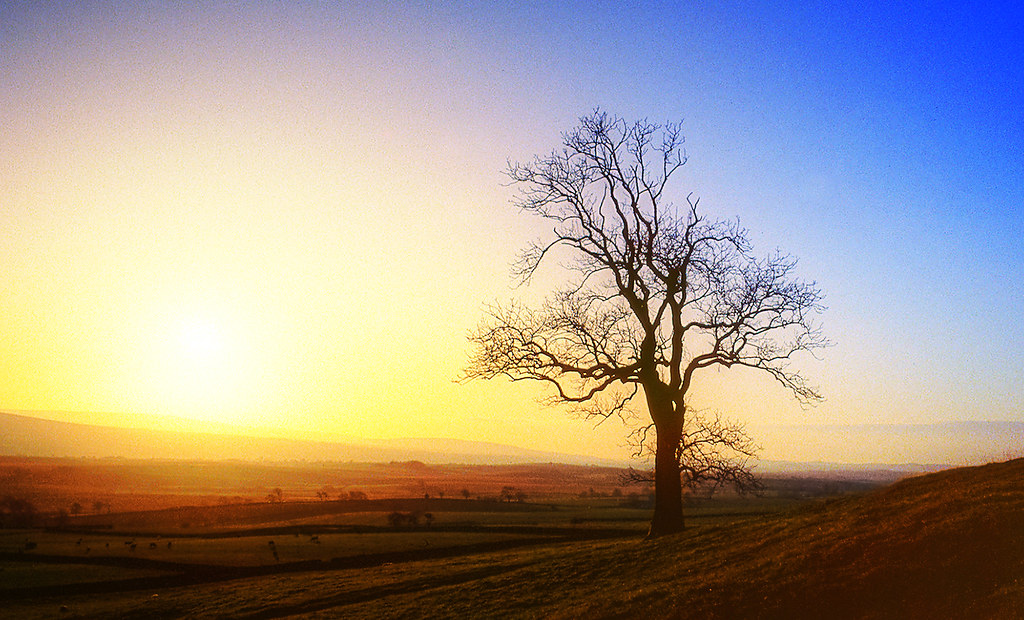 IMAGE: http://farm3.static.flickr.com/2634/4327739654_eca2b7aabb_b.jpg