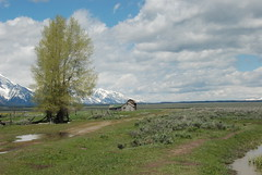 Thomas Murphy Homestead - Mormon Row Historic District - Grand Teton National Park (jrozwado) Tags: usa barn nationalpark northamerica homestead wyoming grandteton murphy historicsite mormonrow antelopeflats