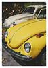 17_02_05_100p (2) (Quito 239) Tags: käfer volkswagen 1971volkswagen 1971volkswagensuperbeetle superbeetleconvertible vw bug vocho escarabajo puertorico haciendaigualdad volky