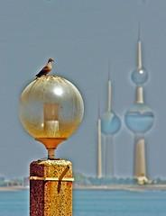loved the view (PhotoGrapherQ80 KWS) Tags: bird by kuwait adel abdeen