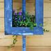 5 - 6 juillet 2009 Paris Place de l'Hôtel de Ville Jardin éphémère dédié à la biodiversité et à la gestion écologique Fleurs bleues dans une boîte bleue = Blue flowers in a  box