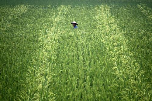 中国.乐山:一位农民穿过他的 by michael peng, on Flickr