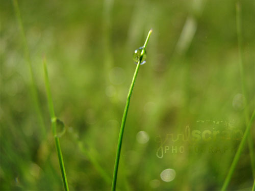 once upon a time, on a sunday morning...{grass}