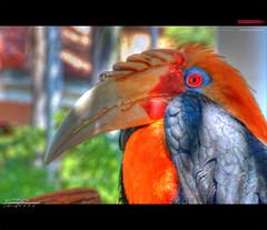 Can't do the stolen shot? - @EXPLORE (LAR's [ Larry ]) Tags: bird colors birds animals bokeh lars bokehlicious extintbird cantdothestolenshot
