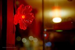 Electric Bloom (Adam Dimech) Tags: street city light flower art film window night evening gallery display kodak bokeh dusk fitzroy kodakportra400vc smithstreet australia melbourne victoria scan led negative portra portra400vc 400vc v500 incube8r