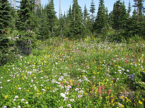 Alpine Meadow on Mount Revelstoke