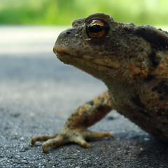 """Firm grip, bold eye... Prince Charming?"" (Moser's Maroon) Tags: kiss 6ws pad toad princecharming kus droomprins"
