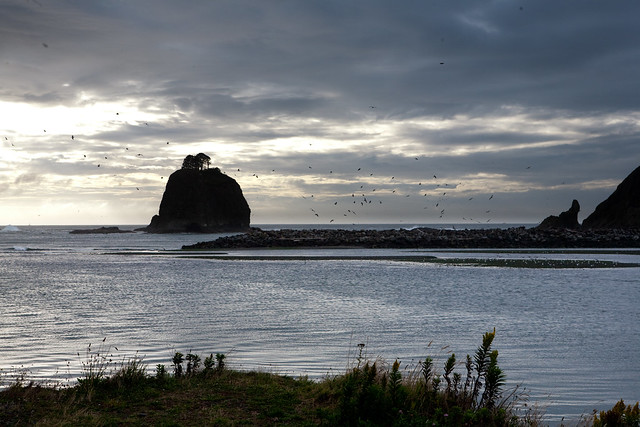 Birds at La Push