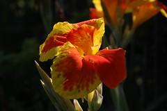 IMG_3202 (jozef muylle) Tags: flowers philippines natuur bohol bloemen filippijnen