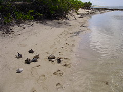 Guadalupa: Petite-Terre