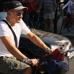 Little Passenger (Feggy Art) Tags: dog white london art bike bicycle canon square eos rebel cycling cyclist ride transport trafalgar trafalgarsquare riding cycle xsi transportion feggy victius feggyart