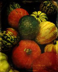 Pumpkin and squash display in Lidl (louisahennessysuɹoɥƃuıʞıʌ) Tags: cameraphone autumn texture halloween mobile pumpkin october display supermarket gourd squash mobilephone lidl