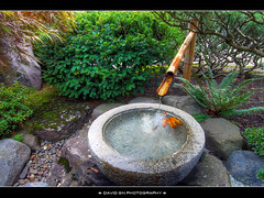 Kakehi (Bamboo Fountain) in Portland Japanese Garden (David Gn Photography) Tags: oregon landscape japanese zen pdx portlandjapanesegarden waterfountain hdr washingtonpark arlingtonheights stonebasin shishiodoshi photomatix kakehi bamboofountain chozubachi deerscarer stonewaterbasin sigma1020mmf35exdchsm canoneosrebelt1i komagshira