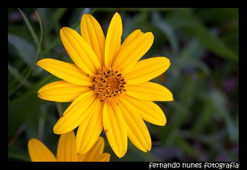 Eu vejo flores em você.
